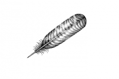 Turkey-Feather-Art