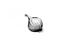 onion-001