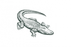 Alligator-art