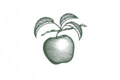 Apple_Woodcut