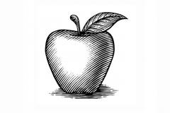 Apple_woodcut_002