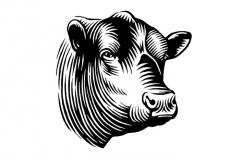 Bull woodcut