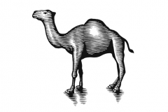 Camel-art-woodcut