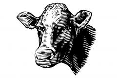 Cow Woodcut