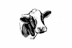Cow-art-5