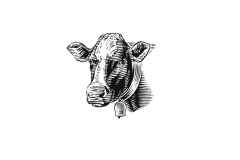 Cow-head