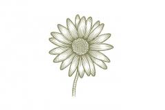 Daisy-art-2