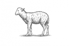 Lamb woodcut