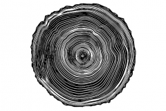 Tree Rings art