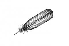 Turkey-Feather-Art