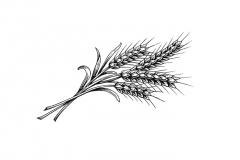 Wheat-art