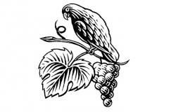 bird_and_grapes