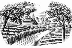 vineyard_scene_001