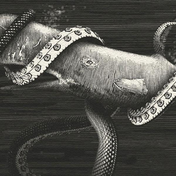 Kraken vs Whale