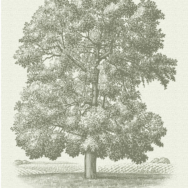 Skinner Vineyards Tree
